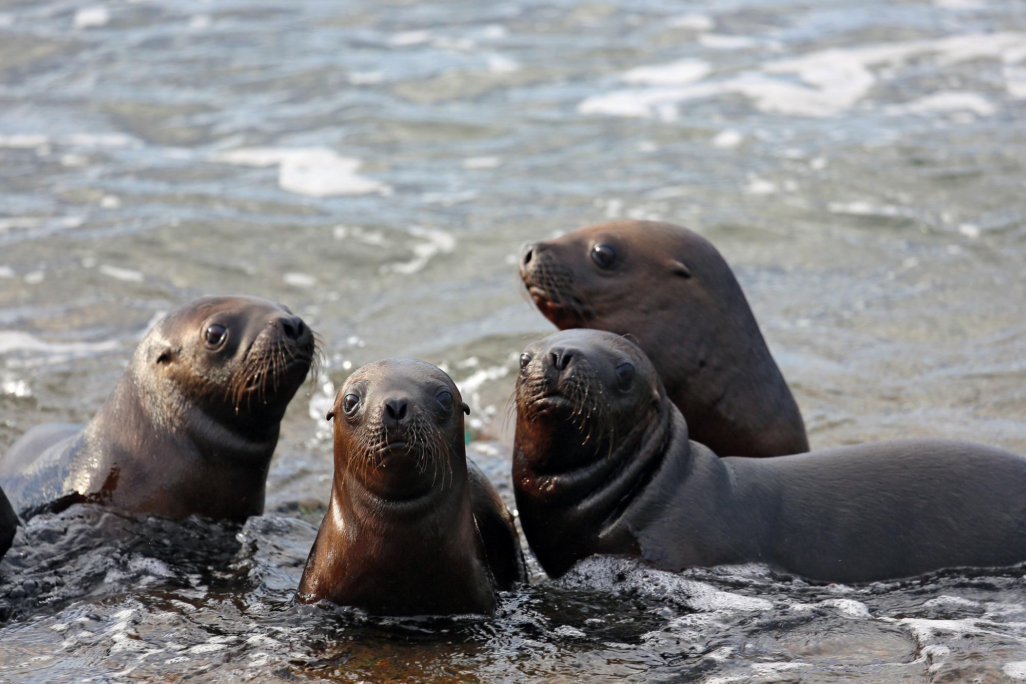 Seelöwen an der Halbinsel Valdes